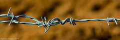 stronger together (RCB4J) Tags: abstract macro art closeup fence photography scotland spring dangerous wire sharp barbedwire daggers entwined ayrshire hss tamronspaf90mmf28dimacro11 notsooc happysliderssunday sonyslta77v ronniebarron rcb4j