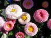 FIORI (cannuccia) Tags: flowers macro nature rosa natura fiori colori macroelsalvador excellentsflowers natureselegantshots mixofflowers esenciadelanaturaleza