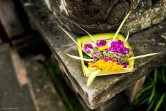 Ubud Bali (Igo Pieters) Tags: flowers bali colors canon 28mm ubud 6d