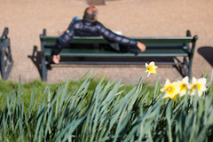 Relax! (Niels A) Tags: man flower bench relaxation kastellet import20160422