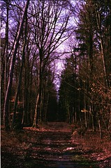 into the woods (ercastrob) Tags: woods nikonfa oberursel eichwldchen agfavistaplus400