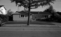 Sunnyvale, CA (bingley0522) Tags: sunnyvale suburbia diafine suburbs sundaymorningwalk carlzeisstessar40mmf35 epsonv500scanner aristapremium400 rollei35germany