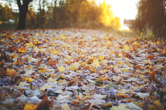 Road of leaves (AlexanderHorn) Tags: autumn red sun sunlight color fall nature colors leaves yellow leaf colorful