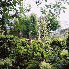 Hidden (Eugene Woronyuk) Tags: portrait man green film nature garden spring odessa ukraine april medium format 120mm    120