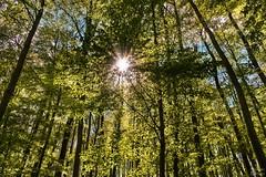 Es grnt und Blht im Harzer Wald (Michael Lumme) Tags: sonne wald sonnenstrahlen harz harzer blht grnt schimmerwald