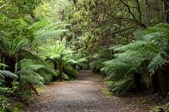 20160125-IMGP2631 (timhughes) Tags: australia tasmania hobart tassie mtwellington ferntree mountwellington 2016