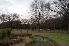 DSC02844.jpg (randy@katzenpost.de) Tags: winter japan yoyogikoen shibuyaku tkyto japanurlaub20152016