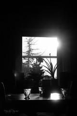 ALJPHOTO #crd141 : Contraste intense en noir et blanc ou #crd36 : Silhouettes en contre-jour. (magaly.pagano) Tags: monochrome noiretblanc lumire nb nuit contrejour fondnoir aljphoto bordurephoto crd141contrasteintenseennoiretblancoucrd36silhouettesencontrejour