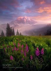 Mystic Park (AleshaOleg) Tags: flowers sunset summer mist fog rainier marc mystic adamus