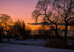 Sunset behind the trees [Explored 2016-01-21] (Maria Eklind) Tags: trees sunset sky snow nature colors weather se europe sweden outdoor sverige malmö solnedgång ribersborg skånelän limhamnsvägen öresundsparken