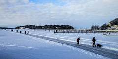 Winter noon (Joni Mansikka) Tags: winter sea snow ice nature woodland suomi finland landscape outdoor january balticsea shore archipelago naantali tamronspaf1750mmf28xrdiiildasphericalif icecover