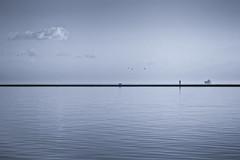 walking with the birds (stocks photography.) Tags: beach coast seaside whitstable tankerton seasidephotography michaelmarsh