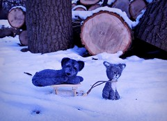 'Oh Boy, you're such a lazy Dog...' (pianocats16, miau...) Tags: park winter snow cute felted cat wolf handmade kitty sleepy tiny sledge
