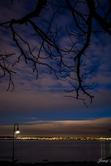 The Bay In The Winter (Janey Song) Tags: street city trees winter nature water night lights branch thebay citynight vancouvercanada lawsonpark canon247028 canon5dmarkiii
