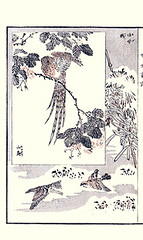 Top  silktree and copper pheasant; Bottom  bunchflower daffodil, dusky thrush and bull-headed shrike (Japanese Flower and Bird Art) Tags: flower bird art japan japanese book pheasant picture daffodil copper fabaceae dusky thrush woodblock ginko nihonga narcissus shrike adachi tazetta turdus silktree amaryllidaceae phasianidae albizia lanius turdidae bucephalus julibrissin bullheaded laniidae naumanni bunchflower syrmaticus soemmerringii readercollection