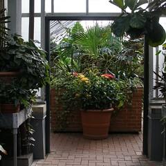Enter (mystuart) Tags: flowers winter garden botanical nc asheville collection pots doorway greenhouse tropical biltmore tender