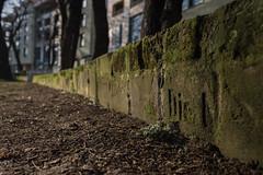 Die Liebe... (Jarek Jahl) Tags: street monument nature cemetery wall germany memorial war tombstone poland gravestone wroclaw breslau sigmalens lowersilesia nikond7200 sigma1835mmf18dchsmart