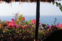 The Temple Lodge, Bali (scinta1) Tags: flowers bali colour garden hotel villa accomodation bukit bourganvillia pecatu bingin thetemplelodge
