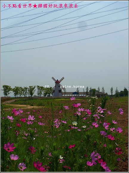 大阜島海邊香氣公園 (49).JPG