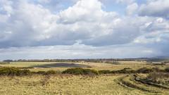 Across the Black Heath... (stevedewey2000) Tags: blackheath manualfocus salisburyplain chinon 50mmf17 vintagelens autorelecta sptacentre