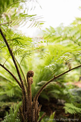 Fern & Frond (BHawk Photography) Tags: fern nature dof florida sarasota marieselbybotanicalgardens bhawkinsphotography