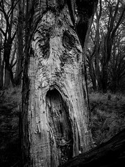 "The Scream in the Forest • <a style=""font-size:0.8em;"" href=""http://www.flickr.com/photos/7605906@N04/25362341790/"" target=""_blank"">View on Flickr</a>"