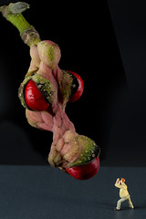 Nessy ou rve inavou de photographe (Pierre-Francois VALCK) Tags: fruit dragon magnolia kobus monstre photographe rve