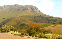 Green Fynbos Slopes (RobW_) Tags: green southafrica march saturday winery uva mira slope stellenbosch fynbos westerncape 2016 05mar2016