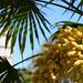 Palm flower, Torquay