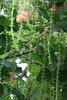 C1_2016-157523 (HamimCHOWDHURY  [Active 01 Feb 2016 ]) Tags: pink flower nature srinagor hamimchowdhury framebangladesh hijolphool