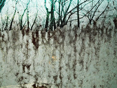 Shades of Green 1 (Rossdxvx) Tags: trees abstract reflection tree green texture nature silhouette woods rust shadows outdoor decay michigan surrealism surreal overlay textures grime minimalism decaying textured