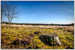 Sonse Heide, Langven, Noord-Brabant (hypnotixed.com) Tags: bomen blauw nederland natuur son fujifilm gras lucht lente heide landschap noordbrabant staatsbosbeheer fujifim xt10 leefilters sonseheide sonsebossen langven