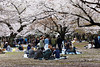 20160405-042-Picnics under Yoyogi-koen cherry blossoms (Roger T Wong) Tags: travel people holiday japan garden balloons tokyo spring picnic crowd harajuku cherryblossoms yoyogikoen 2016 canonef70200mmf4lisusm canon70200f4lis canoneos6d rogertwong