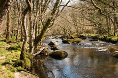 Devon (Keith in Exeter) Tags: uk england tree grass rock woodland river landscape nationalpark unitedkingdom outdoor devon gb serene dartmoor tranquil teign