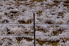 DSC_1107_141 (Jeffery A. Smith) Tags: ice fence nikon icestorm northdakota icicle barbwire freezingrain fencepost fenceline bottineau d3300