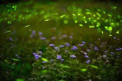 Green Fantasy , Fireflies (Vincent_Ting) Tags: closeup fantastic bokeh firefly  zeiss50mmf14
