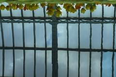 Flowers from Heaven (FiddleHiker) Tags: flowers sky orange white distortion reflection green water fountain yellow religious grey cross tulips upsidedown skylight symmetry christian greenhouse fv10 twincities saintpaul rectangles comopark lightblue intersectinglines marjoriemcneelyconservatory hww minoltamd50mmf17 windowwednesdays
