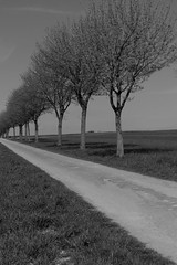 Country Road (Michael Eickelmann) Tags: road trees bw white black country land sw bume schwarz weis strase landstrase