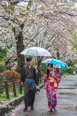 Romance (Pic_Joy) Tags: portrait heritage rain japan lady umbrella costume spring kyoto asia path no traditional blossoms culture traditions kawaii   sakura cherryblossoms kimono hanami pathofphilosophy shirakawa  higashiyama                     tetsugaku michi