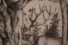 2016-04-24 0345 Albrecht Drer (waltemi) Tags: museum de deutschland hessen darmstadt albrechtdrer gemlde hessischeslandesmuseum ortgebude placebuilding 2016albrechtdrer