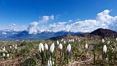 Ultime nevi all'orizzonte (Fernando De March) Tags: dolomitiprealpibellunesibellunonevenevicate