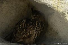 _DSC0410 (chris30300) Tags: france heron de pont parc oiseau camargue gau saintesmariesdelamer flamant provencealpesctedazur ornithologique