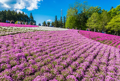 LHM_0123 (Leo Hartadi) Tags: park nature japan landscape saitama chichibu seibu