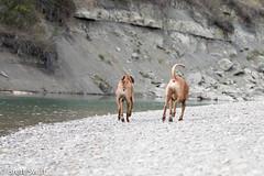 Mates (brettswift) Tags: dog calgary enzo