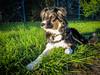 Lisca just posing ... (K r y s) Tags: nature outdoor posing extérieur patrol alert lisca basenautique