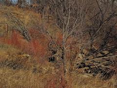 Creek Side (berrywine) Tags: paths