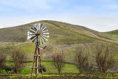 american farmland (pbo31) Tags: california winter brown color green windmill northerncalifornia america nikon farm flag country hill january farmland pasture bayarea eastbay livermore alamedacounty 2016 boury pbo31 d810
