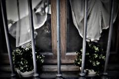 Gattino curioso (gabri tropea) Tags: italy finestra piemonte gatto benevagienna