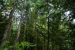 Forest near Bridal Veil Falls (Steve AM) Tags: canadianrockies bridalveilfalls forest canada rockies canadian rockymountains moosetour summer2013 northamerica