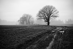 Vers Moyvillers. (steph20_2) Tags: winter bw white black monochrome field lumix countryside noir noiretblanc hiver ngc panasonic 20mm monochrom campagne blanc brouillard chemin champ brume picardie oise m43 gh3 skanchelli